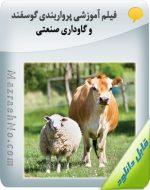 فیلم آموزشی پرواربندی گوسفند و گاوداری صنعتی