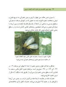 تولید زنبور انکارسیا