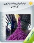 فیلم آموزشی برداشت و فرآوری گل محمدی