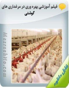 فیلم آموزشی بهره وری در مرغداری های گوشتی