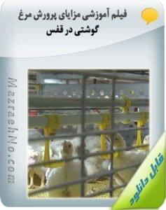 فیلم آموزشی مزایای پرورش مرغ گوشتی در قفس