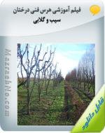 فیلم آموزشی هرس فنی درختان سیب و گلابی