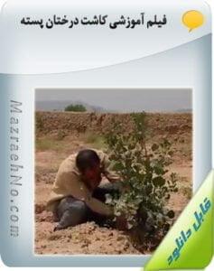 فیلم آموزشی کاشت درختان پسته