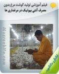 فیلم آموزشی تولید گوشت مرغ بدون مصرف آنتی بیوتیک در مرغداری ها