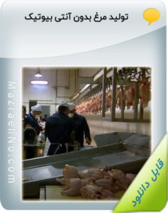 فیلم آموزشی تولید مرغ بدون آنتی بیوتیک